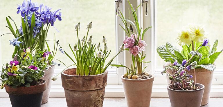 plantes | livraison de plantes