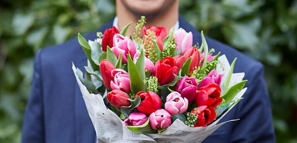 Tulpaner - skötsel och styling